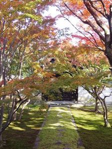 たまには京都で紅葉を。